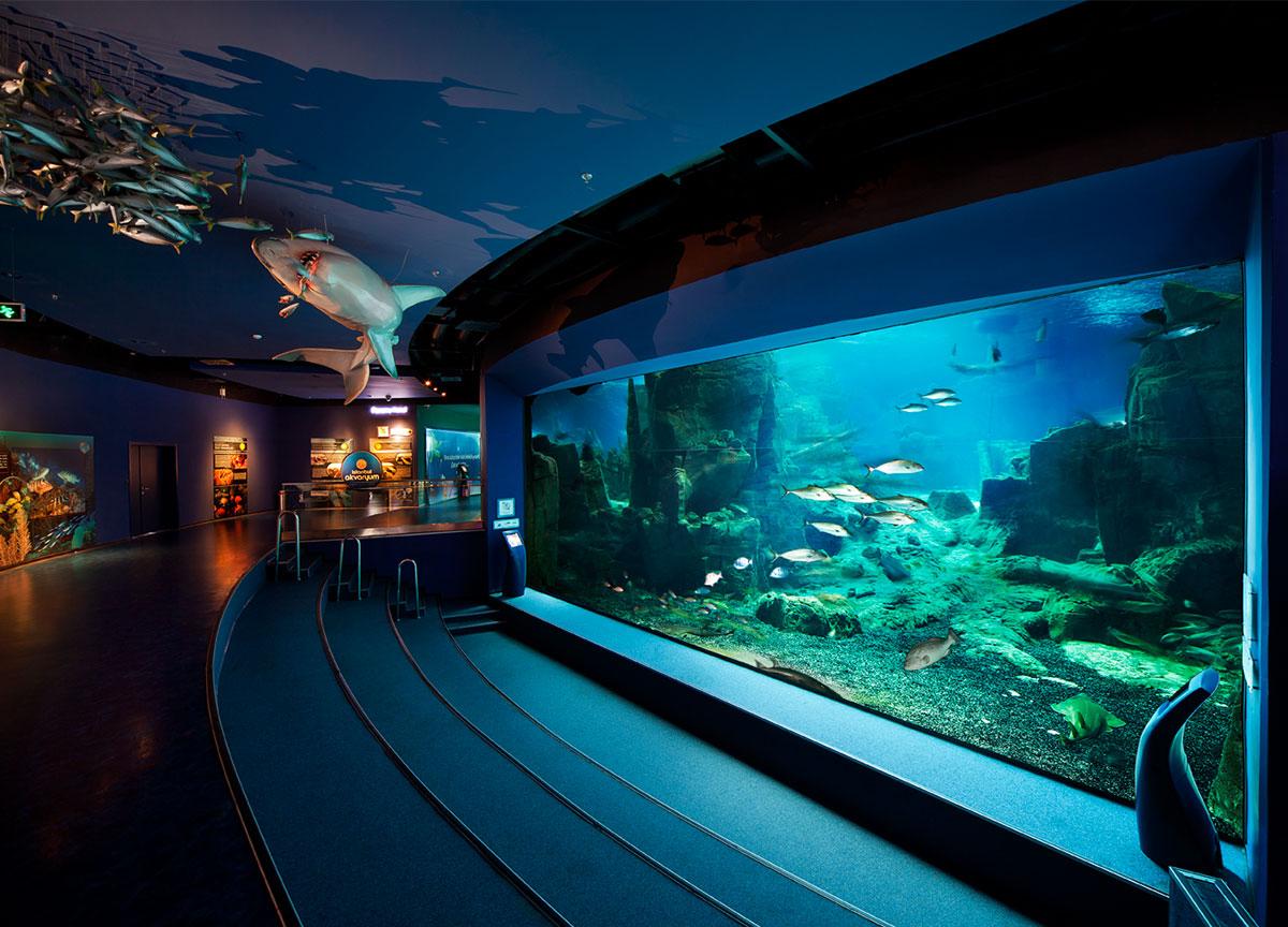 Istanbul Aquarium Sea Life Visit Istanbul